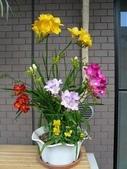 12楓之琳園藝小苗種子圖檔很多稀有植物:T27Jm_XkJaXXXXXXXX_!!1055260041.jpg_310x310.jpg