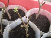 15楓之琳園藝小苗種子圖檔很多稀有植物:W_NwxUlj43Ndk4i86Er7Dw.jpg