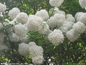 6楓之琳園藝小苗種子圖檔很多稀有植物:下載 (9).jpg