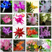 10楓之琳園藝小苗種子圖檔很多稀有植物:T1BEPNXiXcXXX70ro5_054747.jpg_310x310.jpg