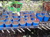 13楓之琳園藝小苗種子圖檔很多稀有植物:20130721_155622.jpg