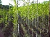13楓之琳園藝小苗種子圖檔很多稀有植物:T2CiqLXalaXXXXXXXX_!!700707507.jpg_310x310.jpg