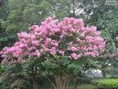 4楓之琳園藝小苗種子圖檔很多稀有植物:Mx8Nb9K5xifa9frVGE5dyQ.jpg