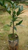 4楓之琳園藝小苗種子圖檔很多稀有植物:gsxScWM21KFjVMmAmFgglw.jpg