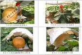 6楓之琳園藝小苗種子圖檔很多稀有植物:T20EO9XghaXXXXXXXX_!!737209148.jpg