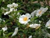 10楓之琳園藝小苗種子圖檔很多稀有植物:c2fdfc039245d6887462a9baa4c27d1ed21b244f.jpg