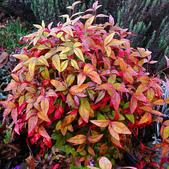 5楓之琳園藝小苗種子圖檔很多稀有植物:cYo9HZ70bqjXOxS_4OI2wQ.jpg