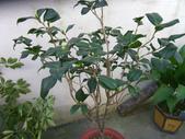 3楓之琳園藝小苗種子圖檔很多稀有植物:oeFTO5vMVFzZ17EmoQpBBQ.jpg