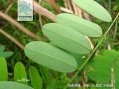 2楓之琳園藝小苗種子圖檔很多稀有植物:uWJI8LPn8PxtMCOIJZoYDg.jpg