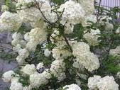 6楓之琳園藝小苗種子圖檔很多稀有植物:images (5).jpg