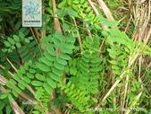 2楓之琳園藝小苗種子圖檔很多稀有植物:dnK8kHeTO_od_36iuJa6tw.jpg
