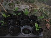 15楓之琳園藝小苗種子圖檔很多稀有植物:IMG_5357.jpg