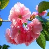 14楓之琳園藝小苗種子圖檔很多稀有植物:T2gcDmXjdXXXXXXXXX_!!749863936.jpg_310x310.jpg