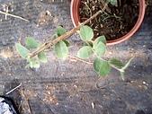 6楓之琳園藝小苗種子圖檔很多稀有植物:IMG_20131004_114844.jpg