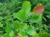 6楓之琳園藝小苗種子圖檔很多稀有植物:ShowImg.gif