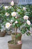 3楓之琳園藝小苗種子圖檔很多稀有植物:nQUwPPFGIH1uI_Ih9lyLZg.jpg