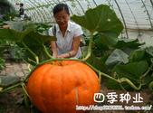 6楓之琳園藝小苗種子圖檔很多稀有植物:T20nXLXbVdXXXXXXXX_!!737209148.jpg