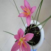 6楓之琳園藝小苗種子圖檔很多稀有植物:T2Edl0XdRcXXXXXXXX_!!52626540.jpg