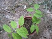 10楓之琳園藝小苗種子圖檔很多稀有植物:IMG_5515