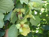 6楓之琳園藝小苗種子圖檔很多稀有植物:01300000254155123107541950706_s.jpg