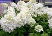 14楓之琳園藝小苗種子圖檔很多稀有植物:200811271325414678.jpg