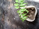6楓之琳園藝小苗種子圖檔很多稀有植物:IMG_20131004_113242.jpg