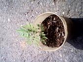 6楓之琳園藝小苗種子圖檔很多稀有植物:IMG_20131004_112622.jpg