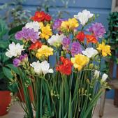 14楓之琳園藝小苗種子圖檔很多稀有植物:T1N0kmXbddXXXXXXXX_!!0-item_pic.jpg_310x310.jpg