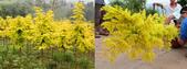3楓之琳園藝小苗種子圖檔很多稀有植物:kyHa97liYADWKhqOL6d0iw.jpg