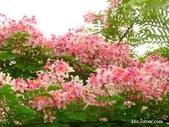 12楓之琳園藝小苗種子圖檔很多稀有植物:images (1).jpg