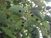 6楓之琳園藝小苗種子圖檔很多稀有植物:下載 (5).jpg