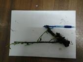 9楓之琳園藝小苗種子圖檔很多稀有植物:20130424_191939.jpg