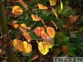 6楓之琳園藝小苗種子圖檔很多稀有植物:r_1261570510.jpg