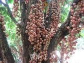 14楓之琳園藝小苗種子圖檔很多稀有植物:T2YddlXnNNXXXXXXXX_!!62484173.jpg