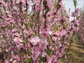 14楓之琳園藝小苗種子圖檔很多稀有植物:201209201748538187.jpg