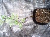 6楓之琳園藝小苗種子圖檔很多稀有植物:IMG_20131004_114352.jpg