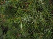 14楓之琳園藝小苗種子圖檔很多稀有植物:T1DdYYXX0mXXb5CrvX_114331.jpg_310x310.jpg