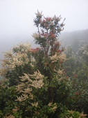2楓之琳園藝小苗種子圖檔很多稀有植物:kUX0KTdMhb37LKNtI9KukA.jpg