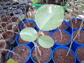11楓之琳園藝小苗種子圖檔很多稀有植物:20130721_154447.jpg