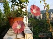 6楓之琳園藝小苗種子圖檔很多稀有植物:T21lEvXgXaXXXXXXXX_!!48630100.jpg