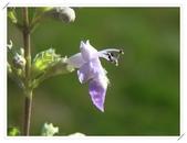 4楓之琳園藝小苗種子圖檔很多稀有植物:1OLzTss9Wd5_je1Z_r4wwQ.jpg