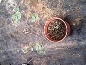 6楓之琳園藝小苗種子圖檔很多稀有植物:IMG_20131004_114842.jpg