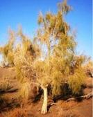 6楓之琳園藝小苗種子圖檔很多稀有植物:20121031161903783_76.jpg