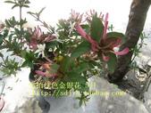 8楓之琳園藝小苗種子圖檔很多稀有植物:T2S2yFXjXXXXXXXXXX_!!409527887.jpg