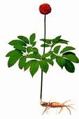 6楓之琳園藝小苗種子圖檔很多稀有植物:01300000121401121161212937910_s.jpg