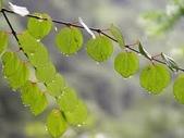 6楓之琳園藝小苗種子圖檔很多稀有植物:下載 (7).jpg