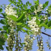 14楓之琳園藝小苗種子圖檔很多稀有植物:T1O2l9XjJoXXcqEIZ4_052321.jpg_310x310.jpg