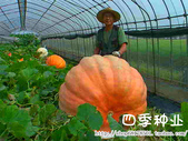 6楓之琳園藝小苗種子圖檔很多稀有植物:T2ZDhNXeFdXXXXXXXX_!!737209148.jpg