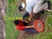 4楓之琳園藝小苗種子圖檔很多稀有植物:ecVD2oBNhFeY_5CdwvsBsA.jpg