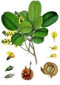 12楓之琳園藝小苗種子圖檔很多稀有植物:e73312440-ac-4105xf9x0250x0353-m.jpg